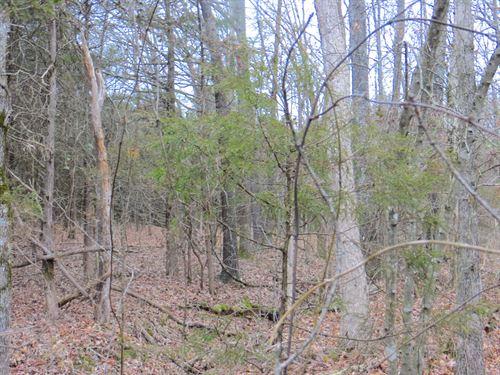 Land For Sale on 11 Point River : Pocahontas : Randolph County : Arkansas