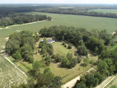 447.31 Acre Farm For Sale in Early : Damascus : Early County : Georgia