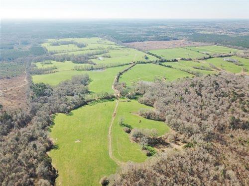 904 Acre Large Pastureland, Lake Fo : Centreville : Amite County : Mississippi