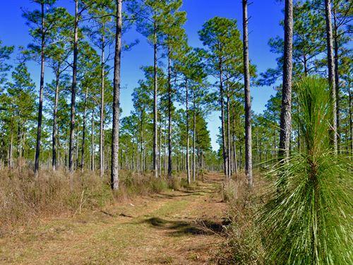 Florida Longleaf Pines Farms for Sale : Find Longleaf ...