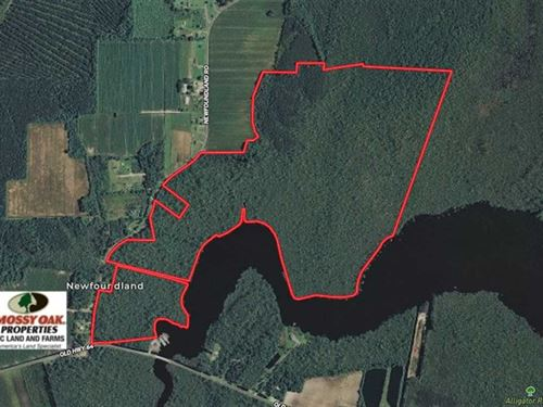 220 Acres of Hunting Land For Sale : Columbia : Tyrrell County : North Carolina