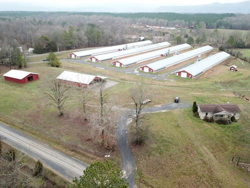 Little Sugar Creek Pullet Farm : Chatsworth : Murray County : Georgia