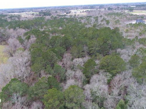 Bizzell Grove Church Road Timberlan : Selma : Johnston County : North Carolina