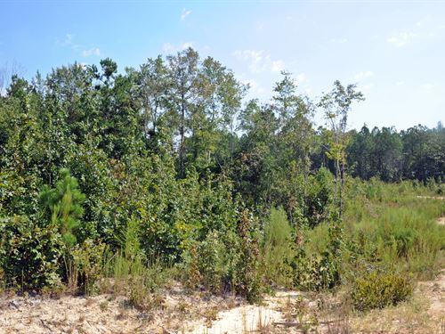 Marlboro County SC Acreage : Wallace : Marlboro County : South Carolina