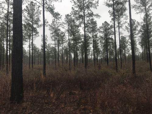 Timber, Hunting, & Creek : Preston : Webster County : Georgia
