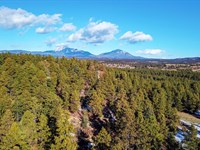 Wooded Mountain Lot, Electricity : Weston : Las Animas County : Colorado