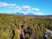 Wooded Mountain Lot w Electricity : Weston : Las Animas County : Colorado