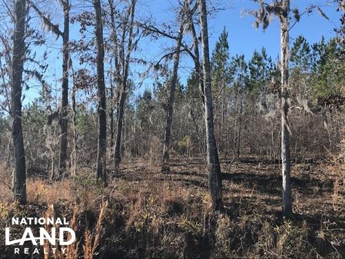 248 Acres in Manning, SC : Manning : Clarendon County : South Carolina