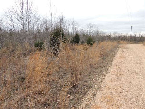 Vacant Land Tn, Hunting Land Land : Clifton : Hardin County : Tennessee