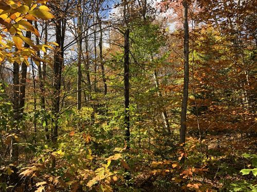 Potter Road Camp Lot : Osceola : Lewis County : New York
