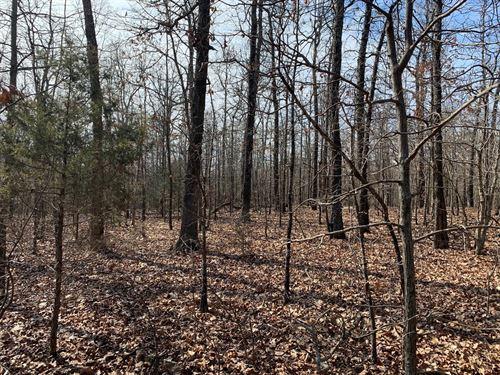 Land, Great Deer Turkey Hunting : Pocahontas : Randolph County : Arkansas
