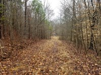 29 Acre Collinwood TN Land Creek : Collinwood : Wayne County : Tennessee