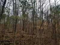 12.6 Acre Collinwood Lutts TN Wood : Collinwood : Wayne County : Tennessee