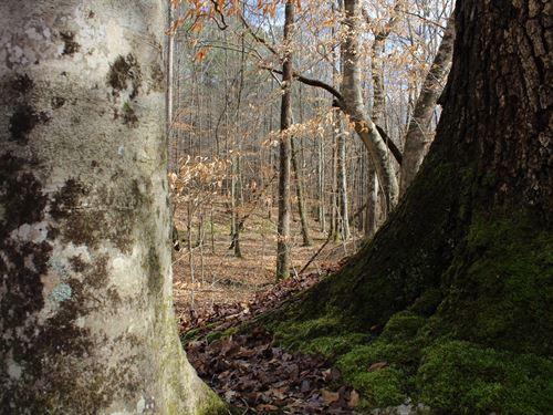 Hardwoods and Creeks, Heard County : Franklin : Heard County : Georgia