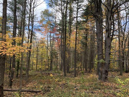 Prince Brook Camp Lot : Osceola : Lewis County : New York