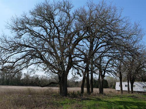 Nice 8.22 Acres : Rockdale : Milam County : Texas