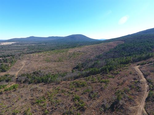 80 Acre Timber Investment Hunting : Poteau : Le Flore County : Oklahoma