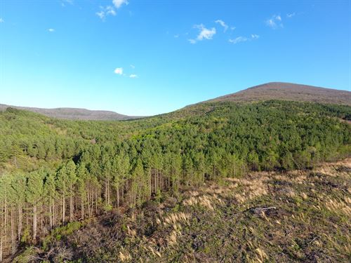 170 Acre Timber Investment Hunting : Poteau : Le Flore County : Oklahoma