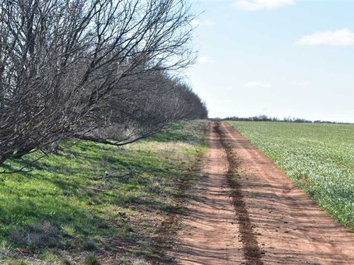 161 Acres Fantastic Hunting Tract : Megargel : Archer County : Texas