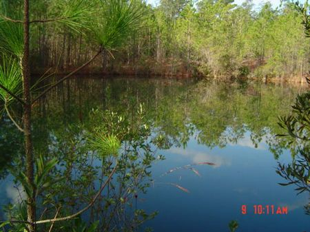 150 Acres With Pond : Statesboro : Bulloch County : Georgia
