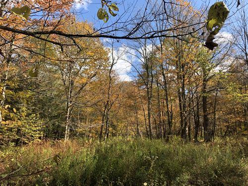 Sugar Maple Woods : Osceola : Lewis County : New York