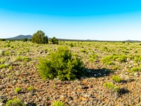 Ranch Near National Forest : Ramah : Cibola County : New Mexico