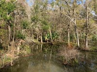 Wooded Property, Levy County : Chiefland : Levy County : Florida
