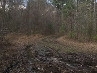 Ultimate Hunting Land : Pattison : Jefferson County : Mississippi
