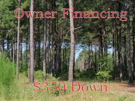 Beautiful, Wooded 5.38 Acre Lot : Rockledge : Laurens County : Georgia