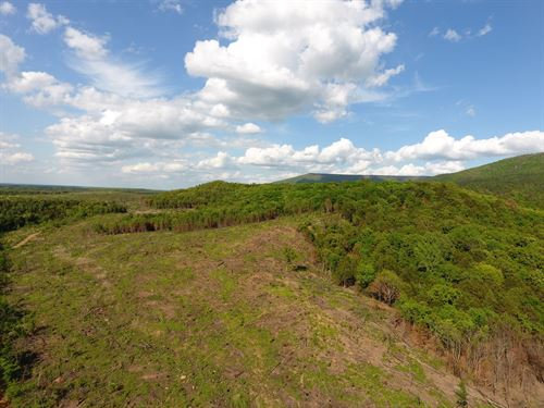 100 Acre Timber Investment Hunting : Poteau : Le Flore County : Oklahoma