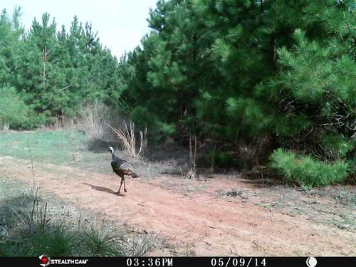 Great 36 Acre Timberland And Recre : Antlers : Pushmataha County : Oklahoma