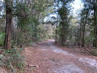 45 Acres Vacant Land, North : Branford : Gilchrist County : Florida