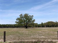 Pastureland Chiefland, Fl, 20 Acres : Chiefland : Levy County : Florida