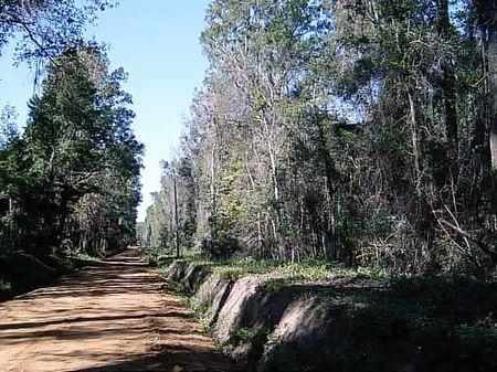 Davis Estate : Monticello : Jefferson County : Florida