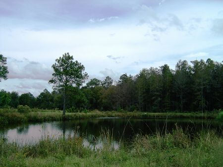 Wolf Creek Farm : Monticello : Jefferson County : Florida