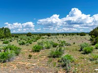 Ranch Near Public Blm Land : Grants : Cibola County : New Mexico