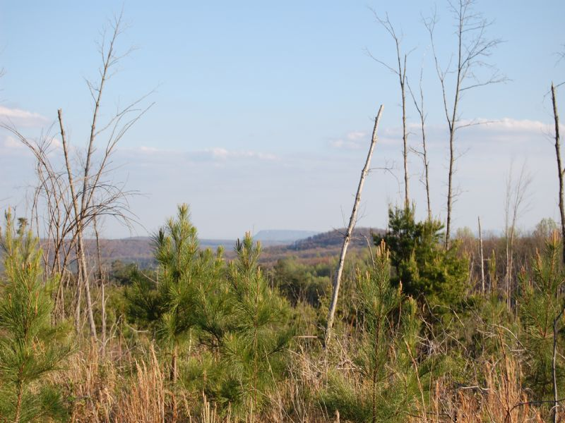Walden Farms - Lot 2a : Signal Mountain : Sequatchie County : Tennessee