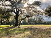 5 Acres in Gilchrist County, FL : Bell : Gilchrist County : Florida