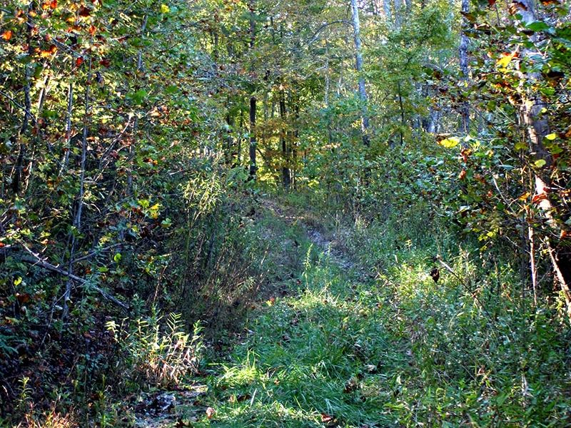 50+ Acres On Signal Mountain Tr#6 : Signal Mountain : Sequatchie County : Tennessee
