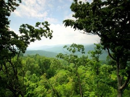 Sequatchie - Lot 8 : Monteagle : Grundy County : Tennessee