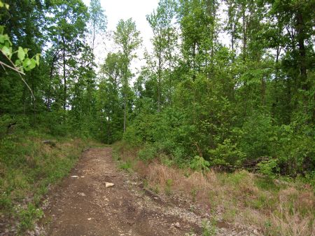 Winchester South - Lot 1 : Keith Springs : Franklin County : Tennessee
