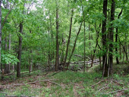 Winchester South - Lot 2 : Keith Springs : Franklin County : Tennessee
