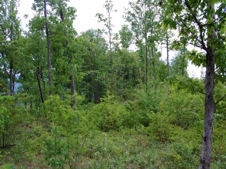 Winchester South - Lot 6 : Keith Springs : Franklin County : Tennessee
