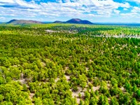 Wooded Land Near National Forest : Grants : Cibola County : New Mexico