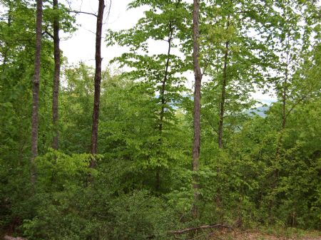 Rock Springs - Lot 15 : Keith Springs : Franklin County : Tennessee