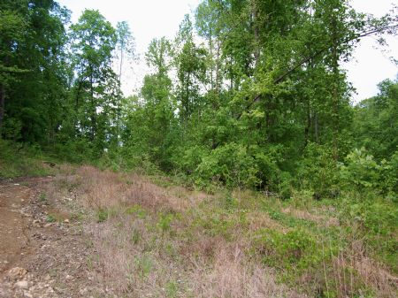 Rock Springs - Lot 16 : Keith Springs : Franklin County : Tennessee