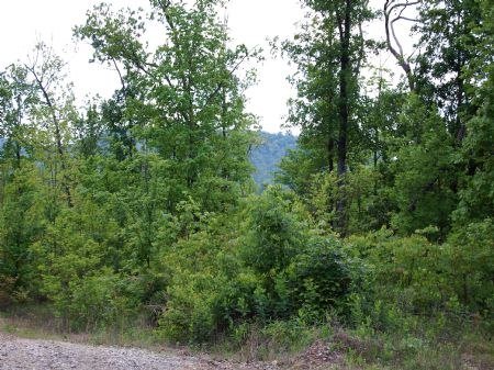Rock Springs - Lot 18 : Keith Springs : Franklin County : Tennessee
