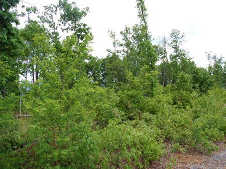 Rock Springs - Lot 19 : Keith Springs : Franklin County : Tennessee