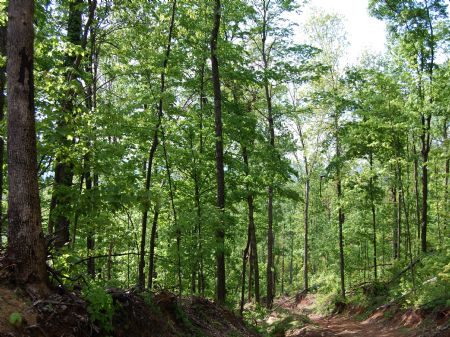 Rock Springs - Lot 23 : Keith Springs : Franklin County : Tennessee