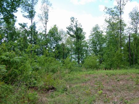 Rock Springs - Lot 24 : Keith Springs : Franklin County : Tennessee